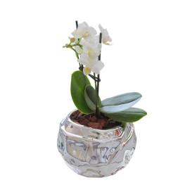 !!!!mini_orhidea_bela_srebrena